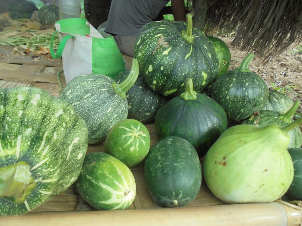Local pumpkins harvested from the jhum fields of Chandigre. Photo: NESFAS/Sengrang Sangma