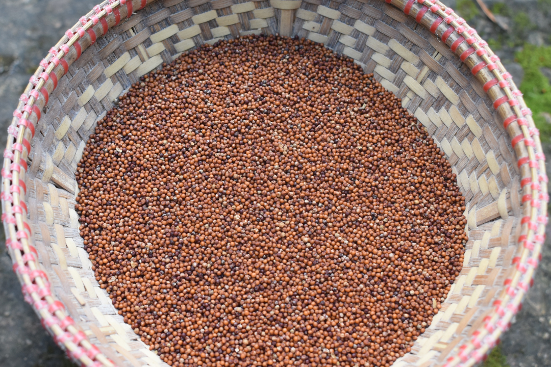 Ri-Bhoi communities to diversify their crops by reviving Millet