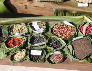 Reaffirming Seed Sovereignty